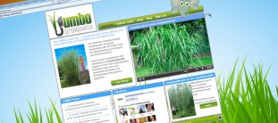webdesign-referenz-jumbograshecke